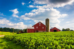 Beautiful farm field and barn on a farm near Spring Grove, Penns Stock Photography