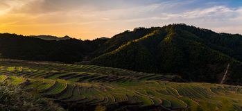 Chinese farm terraces at sunset - Panorama stock photography