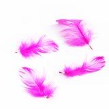Beautiful  feathe Royalty Free Stock Photography