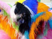 Beautiful feather Stock Photos