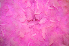Beautiful feather. The Beautiful pink feather decor Royalty Free Stock Image