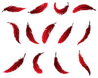 Beautiful Feather Design for Logo Royalty Free Stock Photography