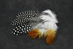 Beautiful feathers Stock Image