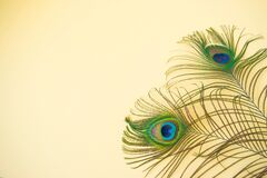 Free Beautiful Feathers From A Peacock`s Tail On An Isolated Pastel Light Yellow Background Royalty Free Stock Photography - 173890357