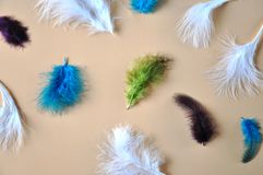 Beautiful Feathers on Pastel Background. Beautiful color feathers on pastel background royalty free stock images