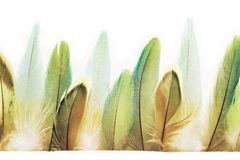 Beautiful feathers on white paper. Turquoise. Green royalty free stock image