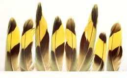 Beautiful feathers on white paper. Yellow. Black. Turquoise royalty free stock images