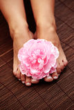 Beautiful feet Royalty Free Stock Image