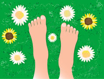 Beautiful feet on the grass. Illustration of feet in the field with flowers and grass Royalty Free Stock Photography