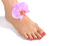 Beautiful feet leg with perfect spa pedicure Stock Photos