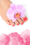 Beautiful feet leg with perfect spa pedicure Stock Images