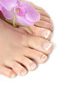 Beautiful feet with perfect french spa pedicure Stock Image