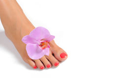 Beautiful feet with perfect spa pedicure Stock Image