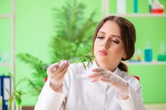 The beautiful female biotechnology scientist chemist working in lab. Beautiful female biotechnology scientist chemist working in lab stock image