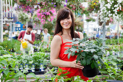 Beautiful female customer holding potted plant. With workers in background Stock Photography