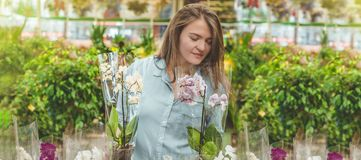 Beautiful female customer smelling colorful blooming orchids in the retail store. royalty free stock image