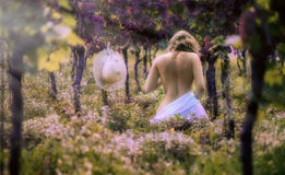 Beautiful female in the dress in the vineyard. At sunset background royalty free stock images