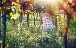 Beautiful female in the dress in the vineyard. At sunset background stock photos