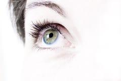 Beautiful female eye Royalty Free Stock Image