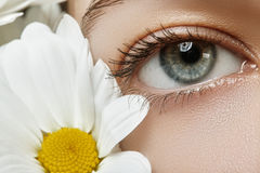 Beautiful female eye. Clean skin, fashion natural make-up. Good vision. Spring natural look with chamomile flowers Stock Photography