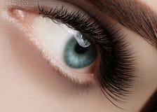 Beautiful female eye with extreme long eyelashes, black liner makeup. Perfect make-up, long lashes. Closeup fashion eyes royalty free stock image