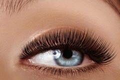 Beautiful female eye with extreme long eyelashes, black liner makeup. Perfect make-up, long lashes. Closeup fashion eyes. Beautiful macro shot of female eye with Stock Photography