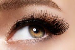 Beautiful female eye with extreme long eyelashes, black liner makeup. Perfect make-up, long lashes. Closeup fashion eyes. Beautiful macro shot of female eye with stock image