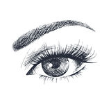 Beautiful female eye. Hand-drawn beautiful female eye Stock Photography