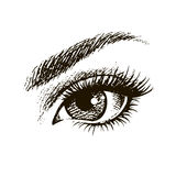 Beautiful female eye hand drawn. Hand-drawn beautiful female eye Royalty Free Stock Photo