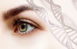 Beautiful female eye looking from DNA chains. Beautiful green female eye looking from DNA chains stock photography