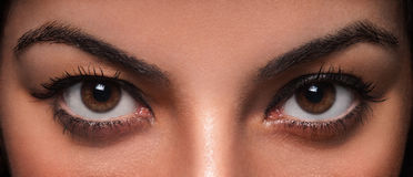 Beautiful Female Eyes. Beautiful and wild female eyes staring or looking at the camera Stock Photos