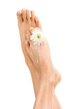 Beautiful female feet Stock Image