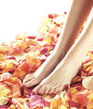 Beautiful female feet with flower petals Royalty Free Stock Photos