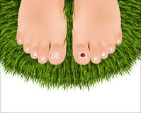 Beautiful female feet with a pedicure vector illustration