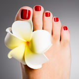 Beautiful female feet with red pedicure Royalty Free Stock Images