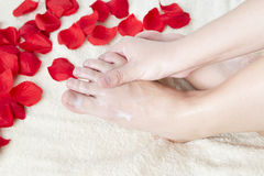 Beautiful female feet and rose petals. royalty free stock image