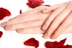 Beautiful female finger nails with natural nail closeup on petal Royalty Free Stock Image