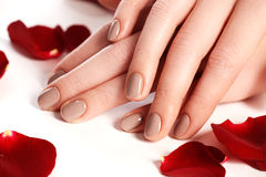 Beautiful female finger nails with natural nail closeup on petal Royalty Free Stock Images