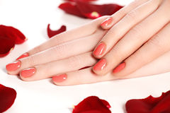 Beautiful female finger nails with red nail closeup on petals. P stock images