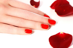 Beautiful female finger nails with red nail closeup on petals. P Royalty Free Stock Images