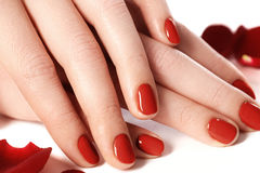 Beautiful female finger nails with red nail closeup on petals. P Stock Photo