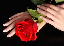 Beautiful female fingers with ideal french manicure touching red rose. Care about female hands, healthy soft skin royalty free stock photos
