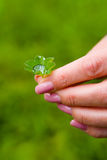 Beautiful female fingers with a manicure hold a leaf of the plan Stock Photography