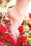 Beautiful female foot Royalty Free Stock Photos
