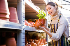 Beautiful female gardener looking for new clay pot in store Royalty Free Stock Images