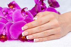 Female hand with french manicure. Beautiful female hand with french manicure on purple orchid flowers. Manicure salon stock photos
