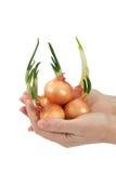 Beautiful female hand keeps onion (isolated) Stock Photo
