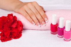 Beautiful female hand with perfect french manicure Royalty Free Stock Photography
