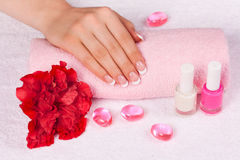 Beautiful female hand with perfect french manicure Royalty Free Stock Photos