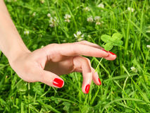 Beautiful female hand with red nail holding four leaf clover. Stock Photo
